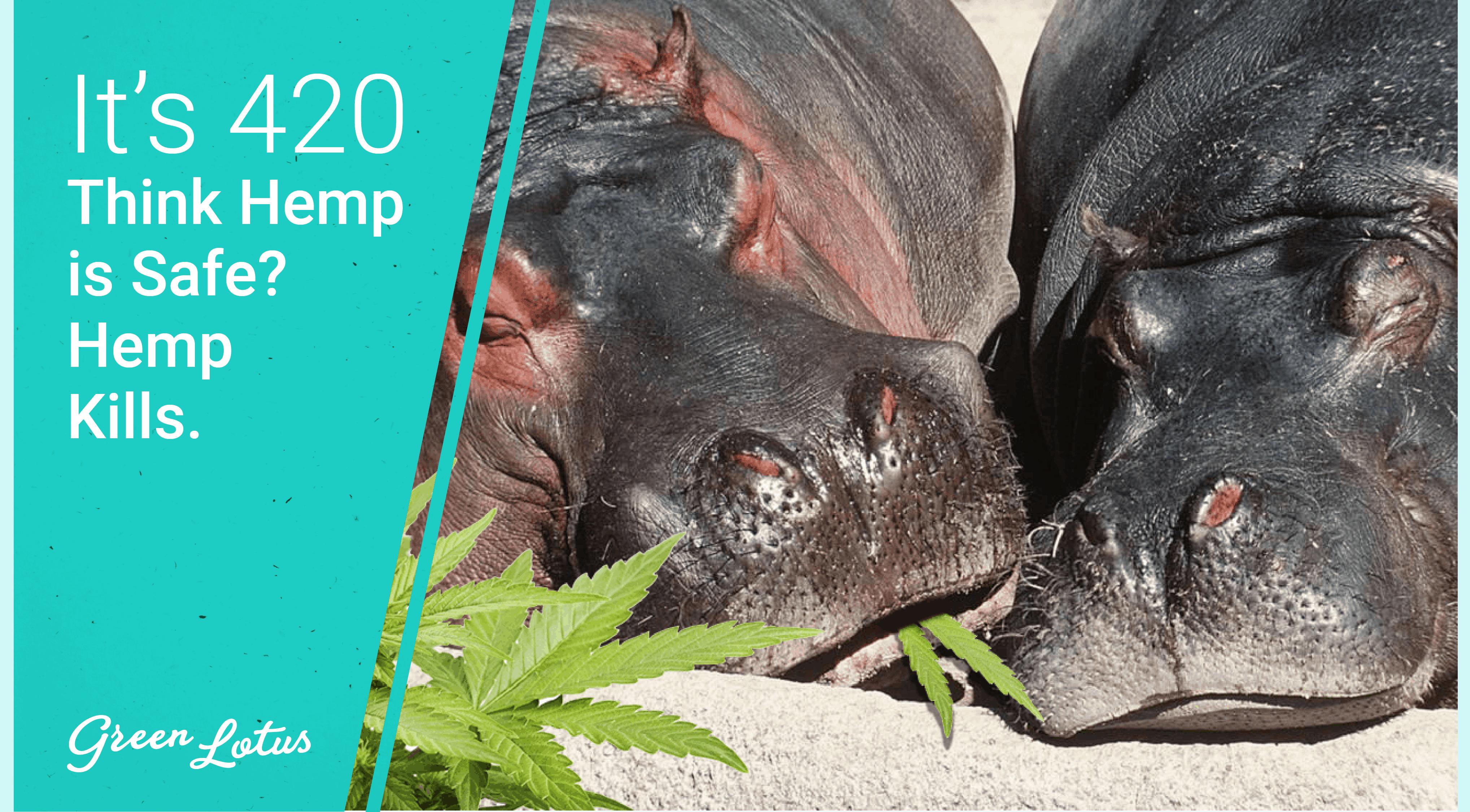 It's 420: Think Hemp Is Safe? Hemp Kills