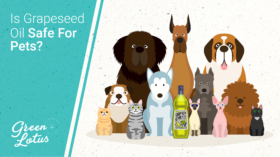 Is Grapeseed Oil Safe for Pets?