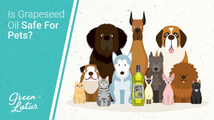 Green Lotus Hemp Blog Is Grapeseed Oil Safe Pets