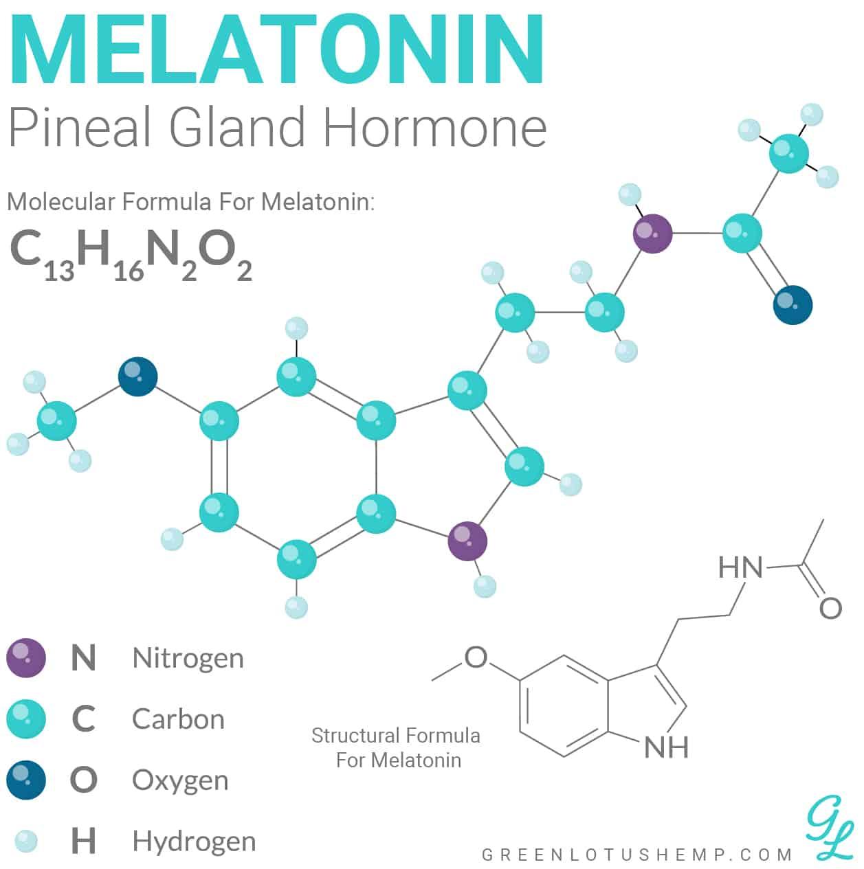 Melatonin Pineal Gland Hormone