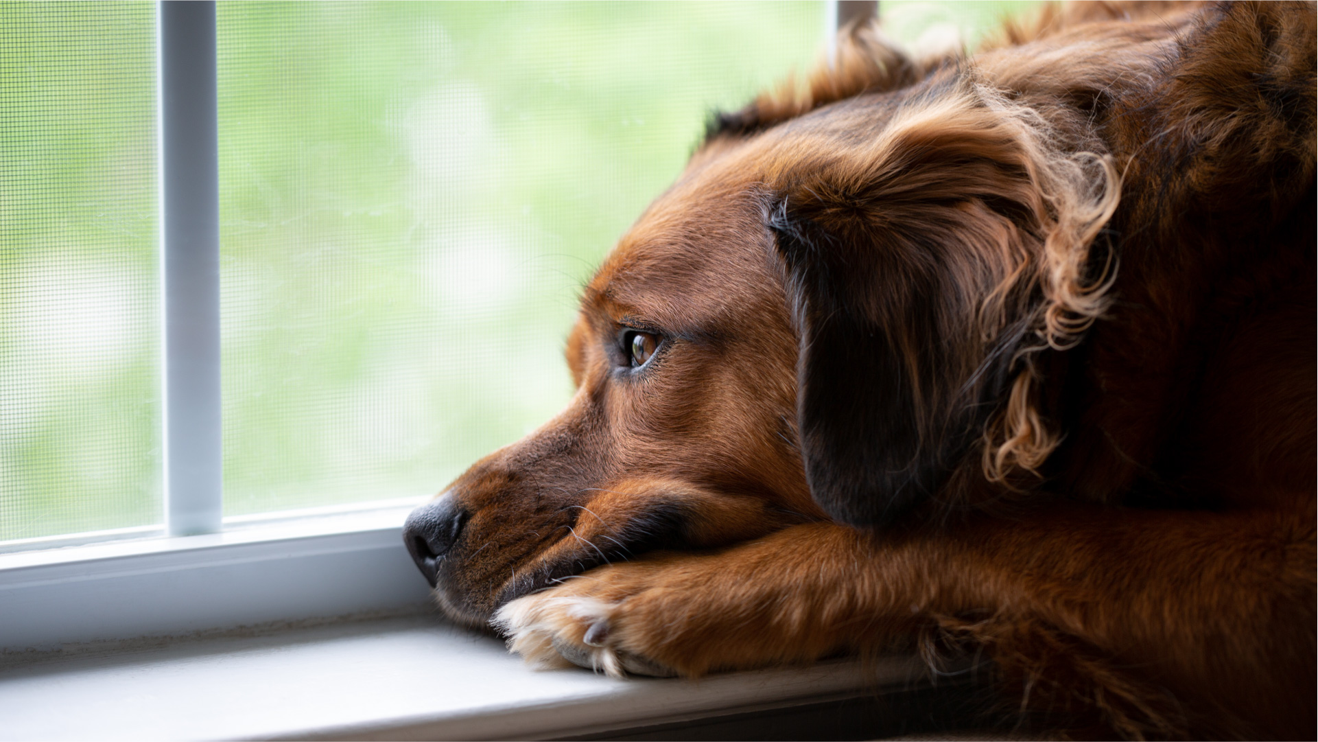 Can CBD Help Pets With Post-Covid Loneliness?